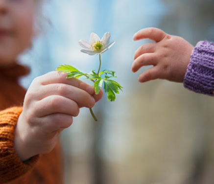 Little boys hand giving early spring flower of snowdrop to his baby - it