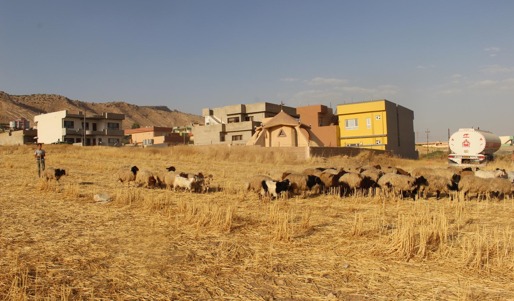 Interminabili campi di cereali davanti al santuario di Alqosh. © Sylvain Dorient