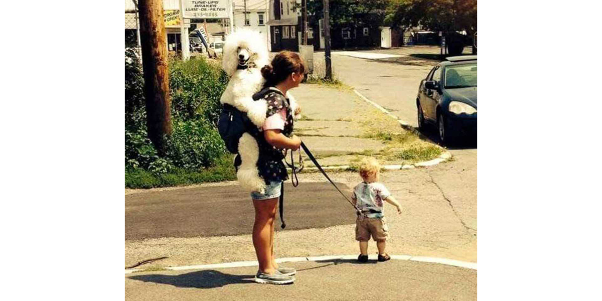 Dog Kid