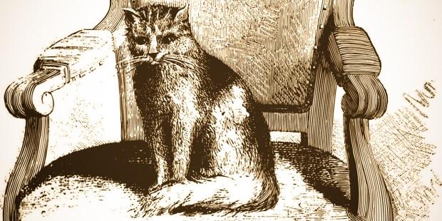 MICETTO CAT