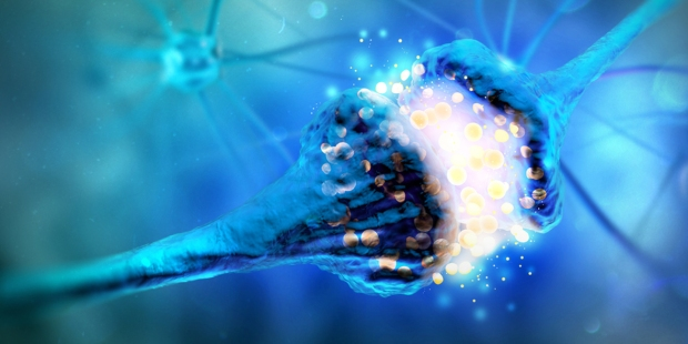 NEUROLOGY,NEURONS