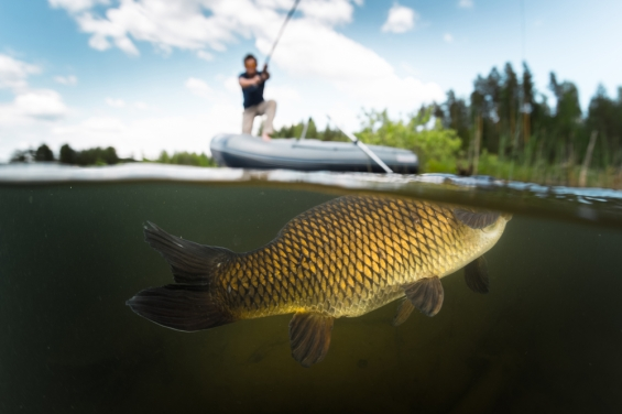 BIG FISH, PESCATORE, PESCE