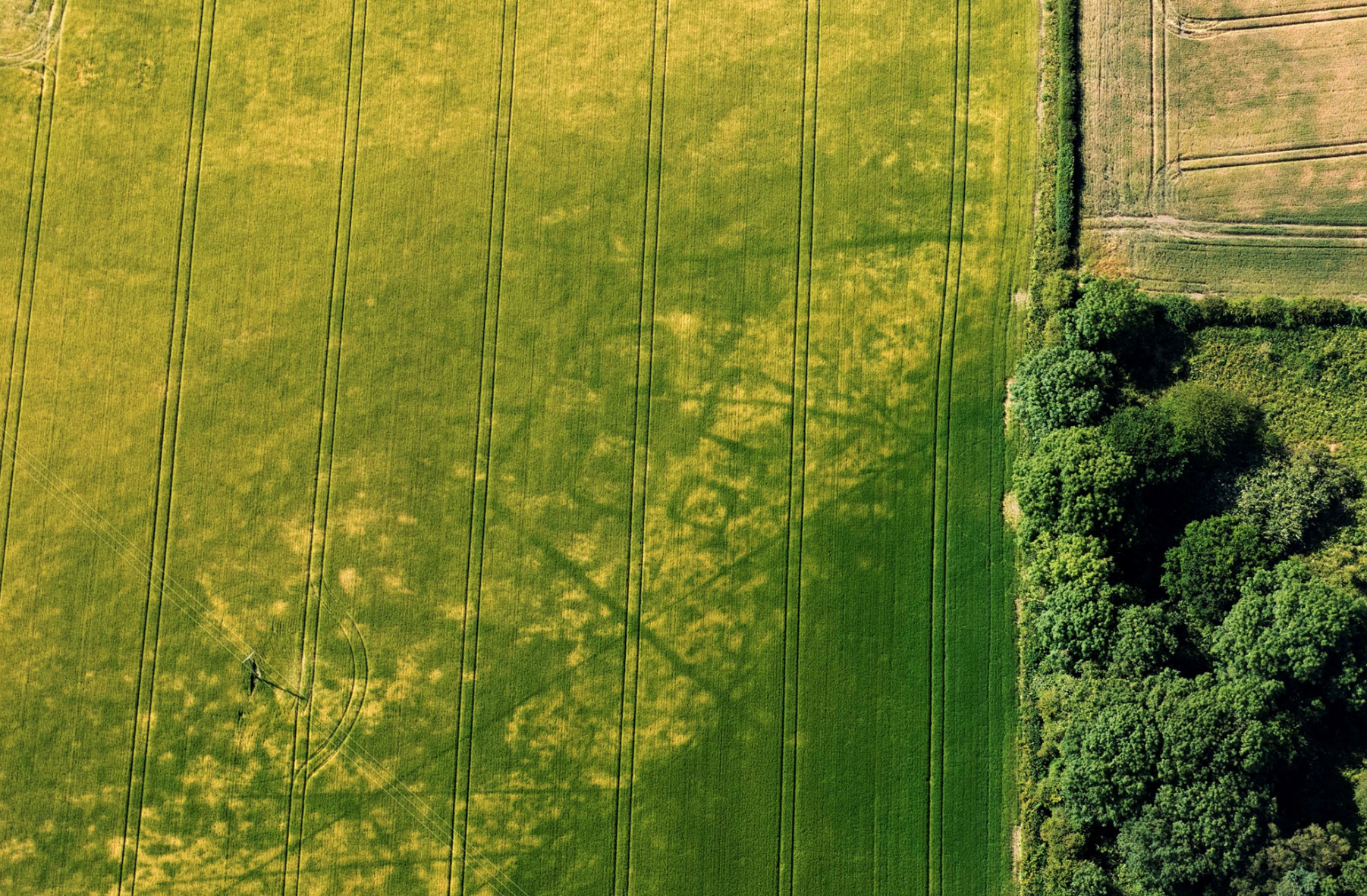 AERIAL ARCHAEOLOGY; YORKSHIRE; CROP MARKS