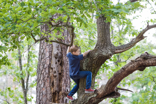BOY, CLIMB, TREE