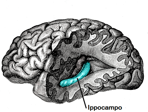 IPPOCAMPUS, BRAIN, DRAWING