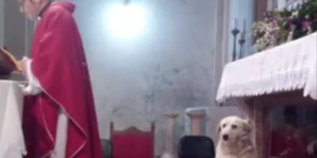 dog, church,