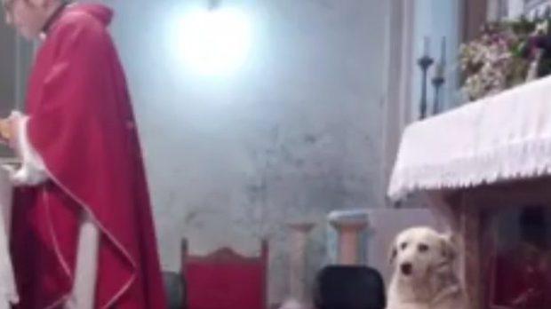 dog, church,