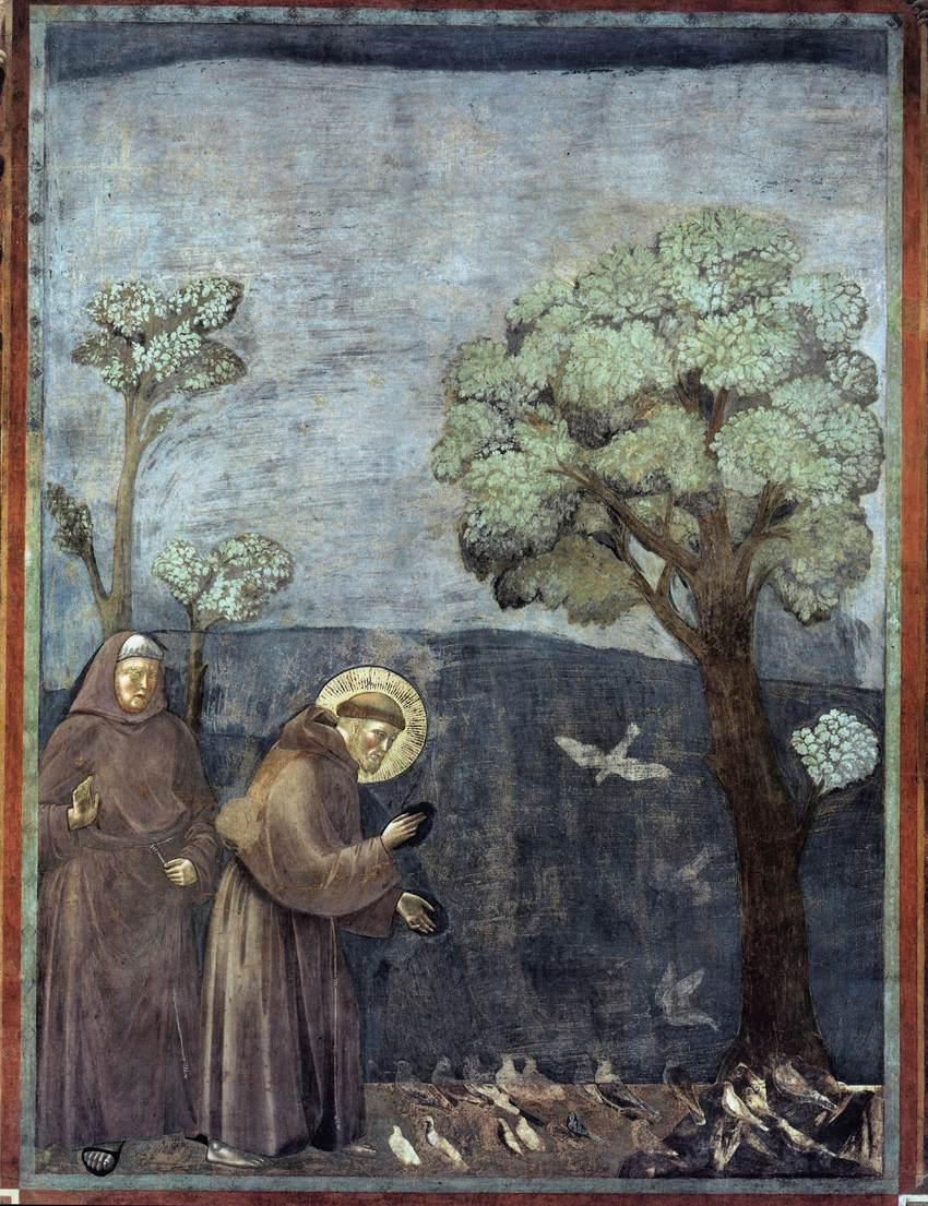 Predica agli uccelli, Giotto