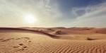 Deserto vita