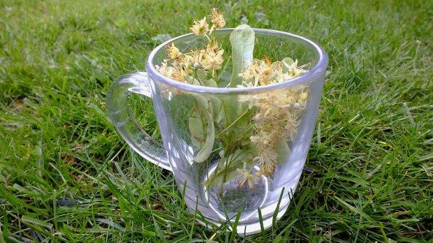 Les plantes anti dépirme