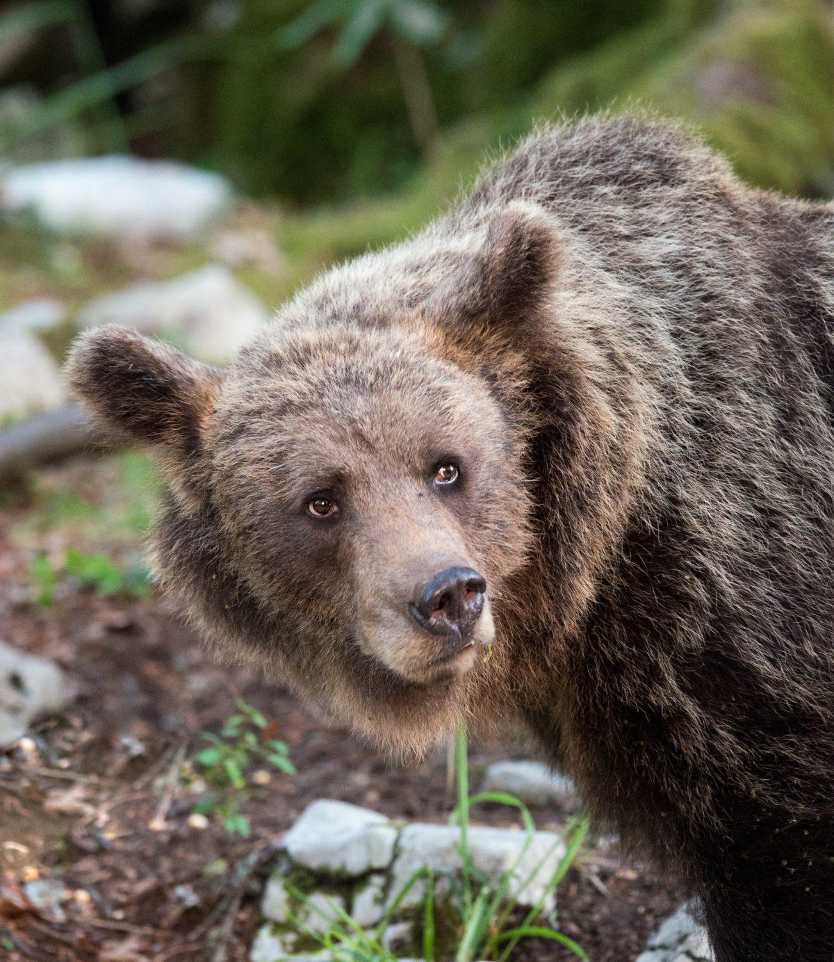 web 3 bear