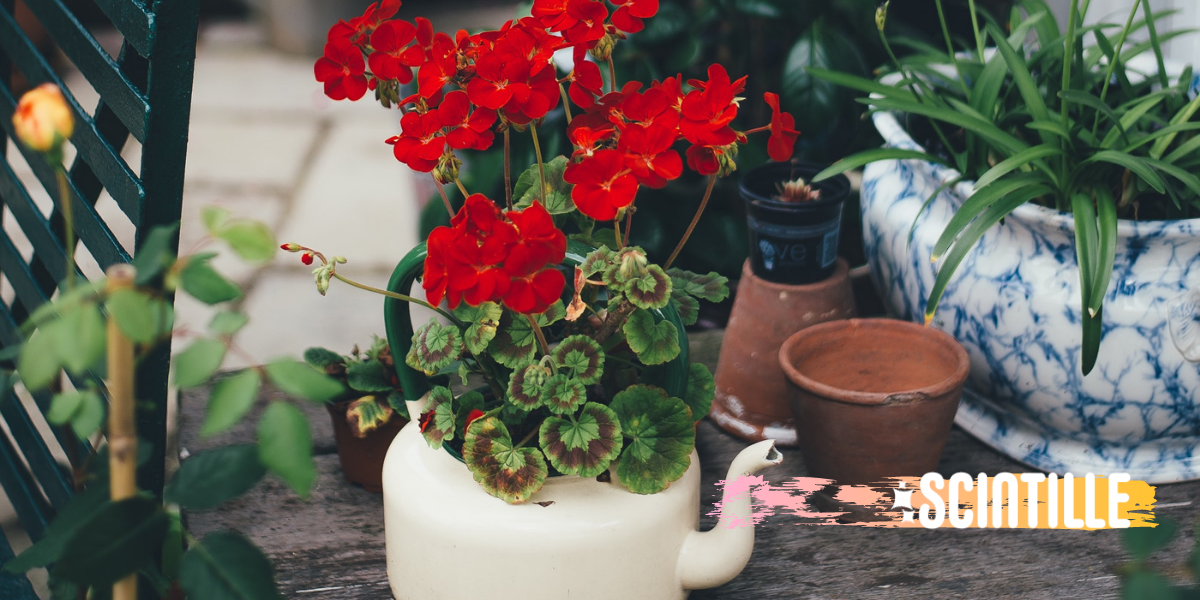 FLOWER, POT, RED