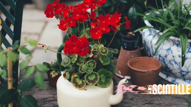 FLOWER, POT, RED