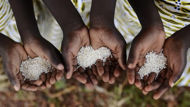 AFRICA, HANDS, RICE