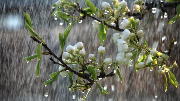 RAIN, DROPS, FLOWERS